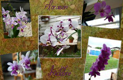 Floraison d'Octobre