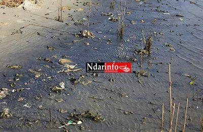 SENEGAL: Saint-Louis : les déchets liquides des Chinois polluent le fleuve!
