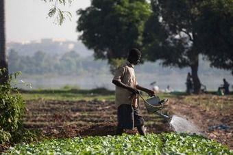 Bassin du Niger : soutenir une gestion coopérative des ressources hydrauliques