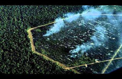 STOP BELO MONTE - Brésil: Champion de monde de la déforestation et du génocide des Indiens