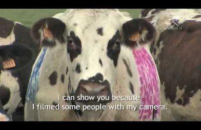 Veaux, vaches et QRcodes...sur BFM TV