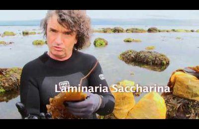 Les algues, découverte et cuisine