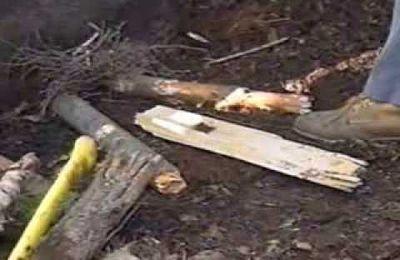 Techniques de survie en forêt