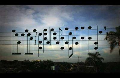 MUSIQUE-La mélodie des oiseaux-Jarbas Agnelli