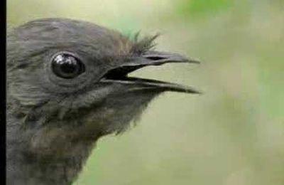 Der komische Vogel