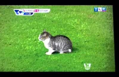 Football : le chat d'Anfield crée le buzz