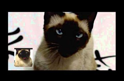 [vidéo] Un chat chante le thème de Game of Thrones