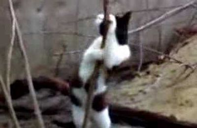 un chat qui fait du pole dance