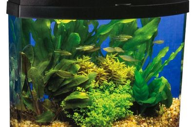 The best 3 gallon fish tank for Betta and stocking the tank