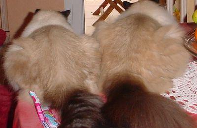 Velvet teste l'anti-stress pour chat !