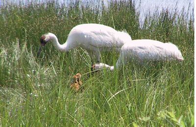How (and Why) to Include National Wildlife Refuges...
