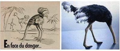 Le mouton, le pigeon, l'autruche, le perroquet - et 2013