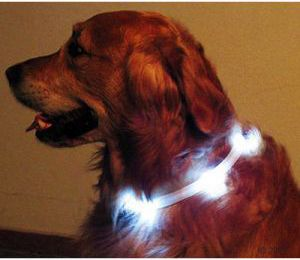 Collier lumineux - Zooplus