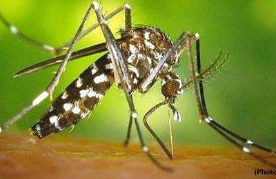 Les moustiques ou moi
