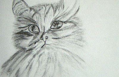 525 - mon premier dessin de chat fait au crayon graphite