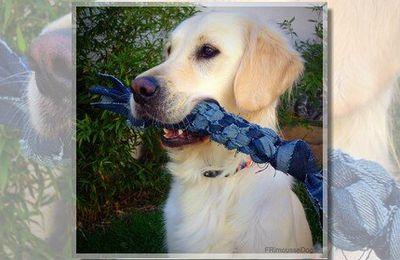 corde /jouet pour chien