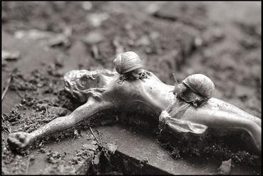 POEME DE MON CRU : A l'enterrement d'une feuille morte ...