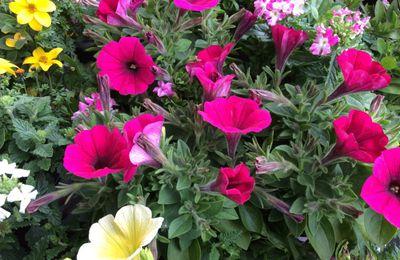 La fleur génétiquement modifiée clandestine dans ton jardin