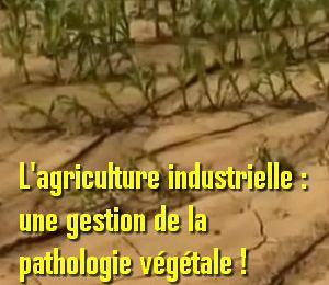 La destruction des sols par l'agriculture industrielle