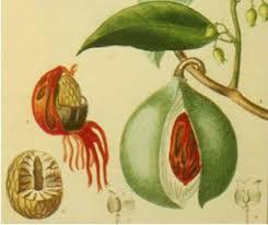 La noix de muscade