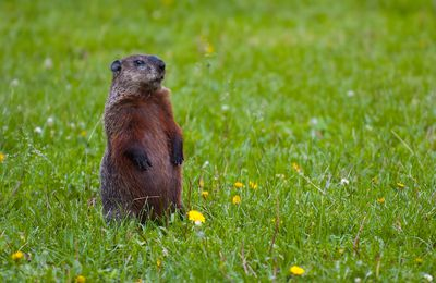 Groundhog Day - mini webquest