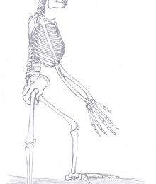 Ardi (paléoanthropologie).