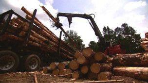 La paradoja de quemar árboles para proteger al medio ambiente