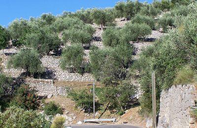 Le jardin des oliviers.