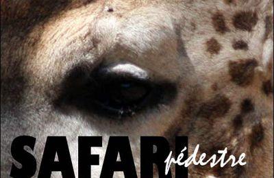 Safari pédestre 3