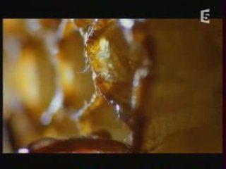 Documentaire - Abeilles