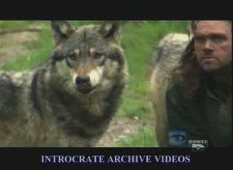 L'homme-loup - éthologie engagée