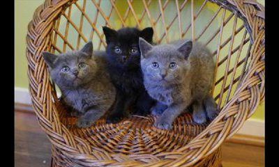 Sont les chats de La Rochelle