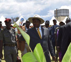 Le Président ougandais s'engage pour les OGM face à un Parlement hésitant