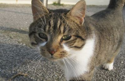 Voisinage : mon voisin ne supporte plus mes chats. ( ici-c-nancy.fr)