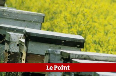Vers l'interdiction du pesticide Cruiser. ( lepoint.fr)