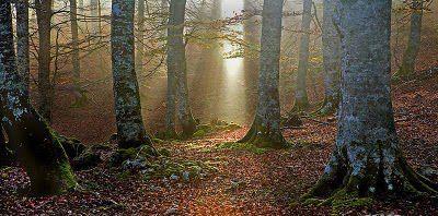 Lancement d'alerte par la Maison de la Nature et de l'Environnement de Pau (MNE de Pau) : Il faut sauver Zilbeti, forêt enchantée des Pyrénées !