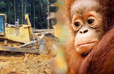 Bornéo : appel d'urgence pour le parc national