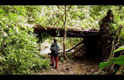 « Paysages sonores » de forêts tropicales
