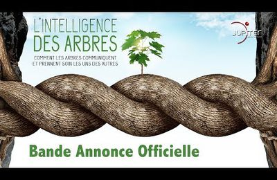 """L'intelligence des arbres"" documentaire."
