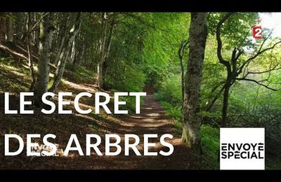 Le secret des arbres