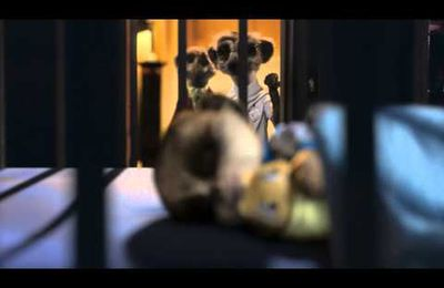 Oleg le suricate