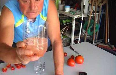 comment récupérer ses graines de tomates ( en video )