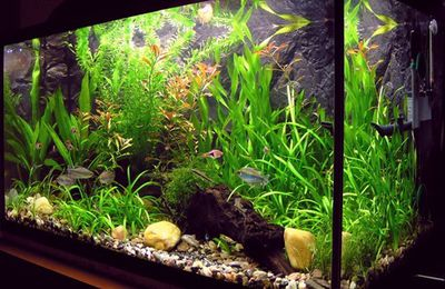 Tips for choosing a 55 gallon fish tank and setup guide
