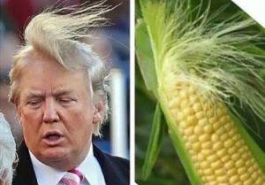 Trump, un Donald entouré de Picsous