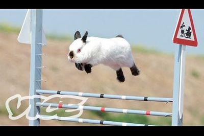 The Jumping Rabbit
