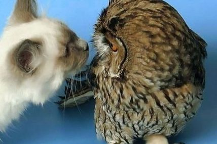 "scrapless • catasters: Cat ""Are you dead?"" Owl ""Not yet...."