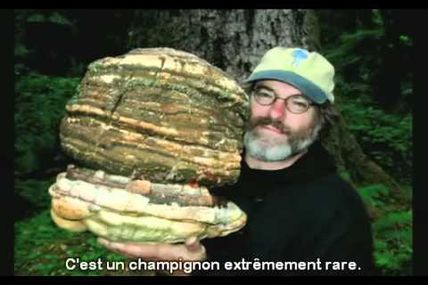 Paul Stamets, éco-scientifique