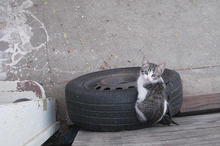 Le chat et le pneu n°10