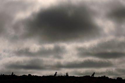 Grandeurs nature-Abyssinie, l'appel du loup