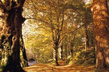 Sanglots d'automne